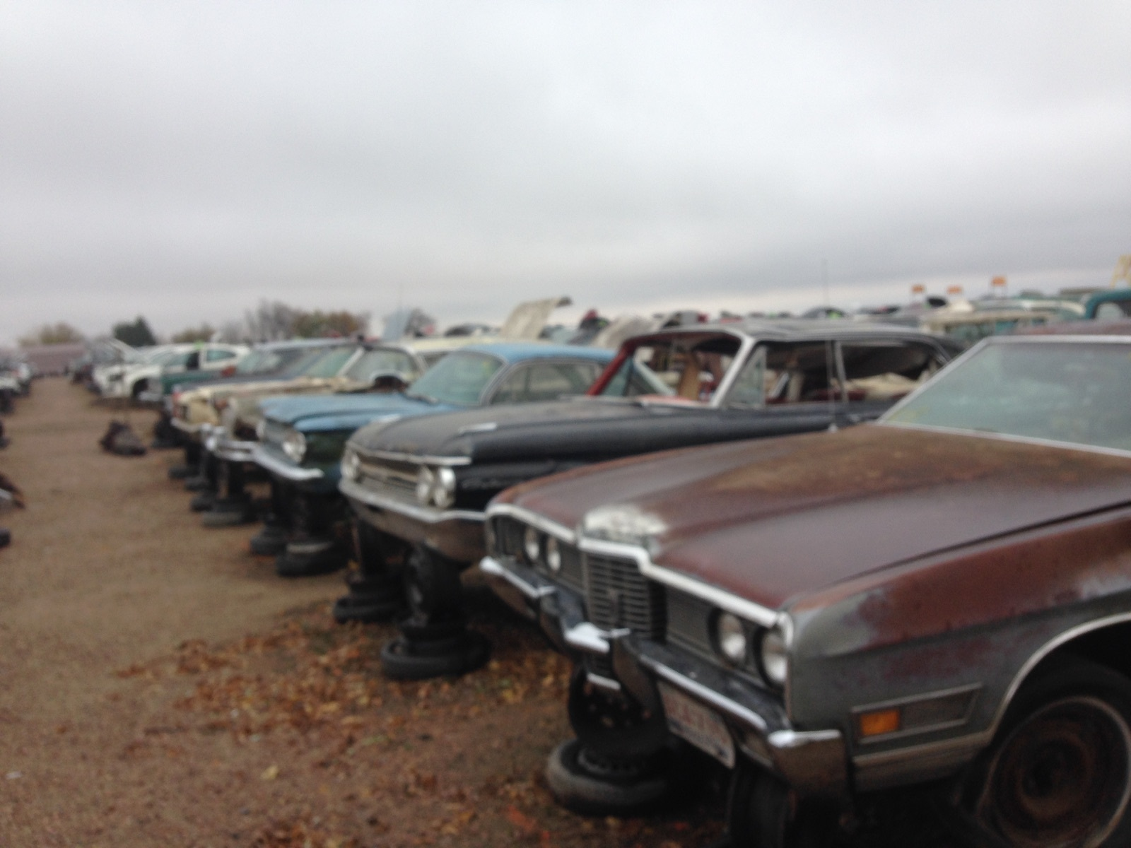 New Row of Old cars and some Imports to be in | Ewe Pullet